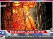 """泰国大叔用太阳光烤鸡 发明超级酷""""太阳烤鸡仪"""""""