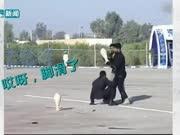 伊朗特战队表演打碎中国瓷器 结果却惨遭打脸