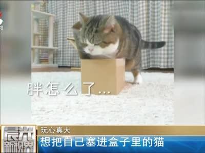 [视频]玩心真大:想把自己塞进盒子里的猫