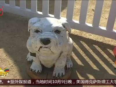 """[视频]绝技 电锯雕刻的""""动物世界"""""""