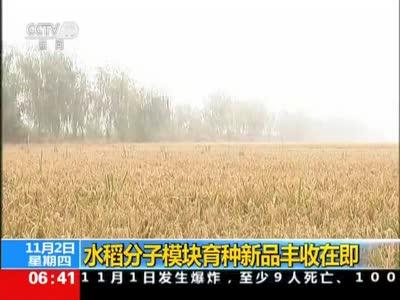 [视频]水稻分子模块育种新品丰收在即