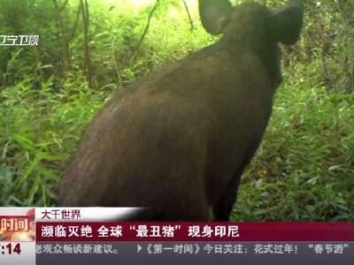 """[视频]濒临灭绝 全球""""最丑猪""""现身印尼"""