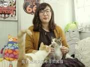 【MagicTV】溜猫实验——测试喵星人被溜反应