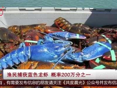 [视频]渔民捕获罕见蓝色龙虾 概率200万分之一