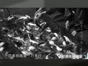 """20170316:探寻""""黄金""""鱼"""