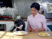 日式厚蛋烧和狗狗一起分享