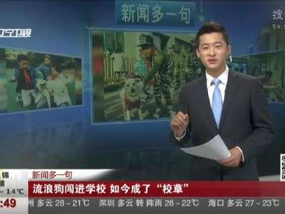 """[视频]流浪狗闯进学校 如今成了""""校草"""""""