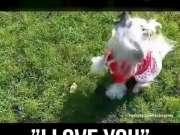"""各种动物版""""I love you"""" 始终还是二哈最传神"""