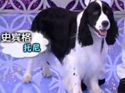 《心动女人帮》20131006:男人不靠谱不如养只狗 更靠谱的宠物情人