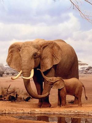 南非野生世界