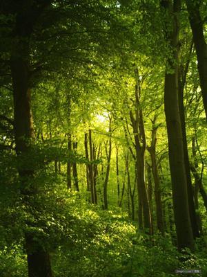 丛林:神奇的另一个世界