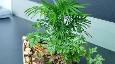 植物做宠物挑选要谨慎 芦荟防虫美肤全身是宝