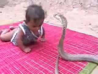 可爱宝宝玩耍眼镜蛇