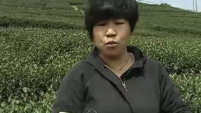 正宗龙井茶叶也愁卖