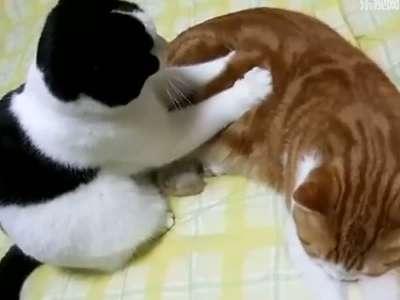 动物按摩简笔画