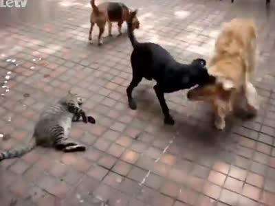 躺/�ij�{��j8�Nh@_大狗打架 淡定猫躺在原地事不关己