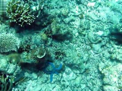 沙巴美人鱼岛-海底- 在线观看