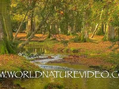 秋天自然的声音1- 在线观看