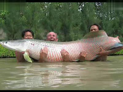 这些变异的动物你见过吗