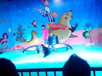 乌鲁木齐海洋馆海豹表演