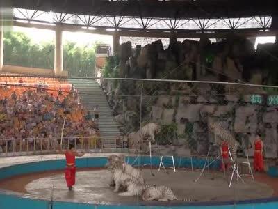 杭州野生动物园马戏表演1
