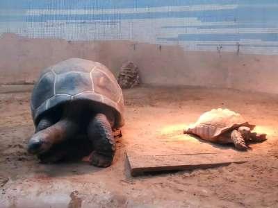 北京动物园 巨型乌龟