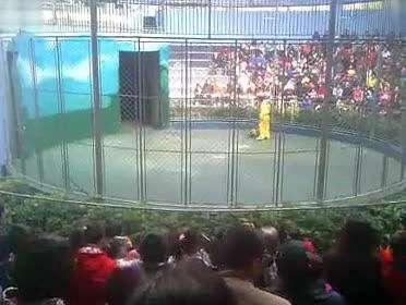 动物园杂技表演小猴- 在线观看