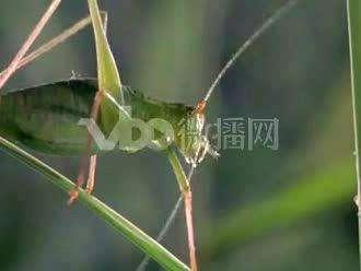 hd素材,动物020014各类昆虫清晨开始活动视频素材