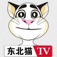 东北猫新媒体